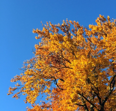 Herbstlaub<br>Ein paar Tage später lag's am Boden