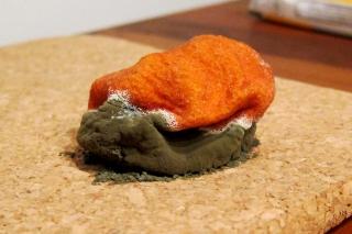 Eine vergessene Mandarine...<br>...hat in den letzten 17 Tagen irgendwie ein Eigenleben entwickelt