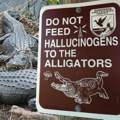 Halluzigene<br>Definitiv nix für Alligatoren. Klarer Fall.