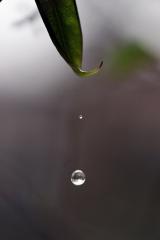 Wassertropfen<br>