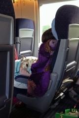 Nette Reisebegleitung<br>Hunde und Katzen sind out, der Mensch von Welt reist mit Karnickeln