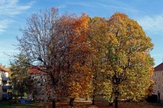 Der Herbst ist da<br>Blick von meinem Balkon.