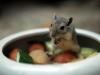 Oder doch nur eine Maus?